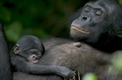 ADCI-Bonobo party: la creatività a caccia del 2.0