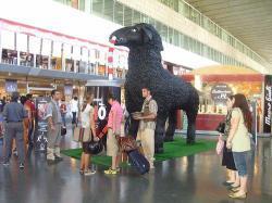 Chinò e la pecora nera