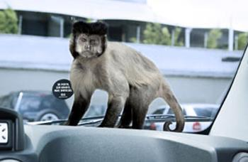 Animal Stickering per lo Zoo Safari