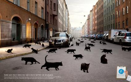 Chi ha paura dei gatti neri?