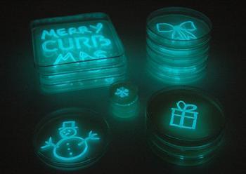 GlowFungi, quando la natura diventa pubblicità