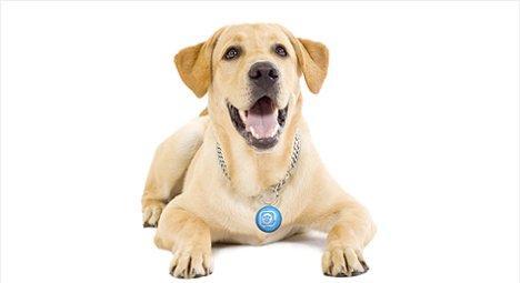 Puppy Tweet: ora anche i cani sono su Twitter!
