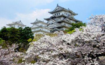 Giappone: promuovere il turismo attraverso i social media