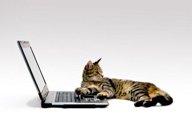 5 social network dedicati a chi ama gli animali