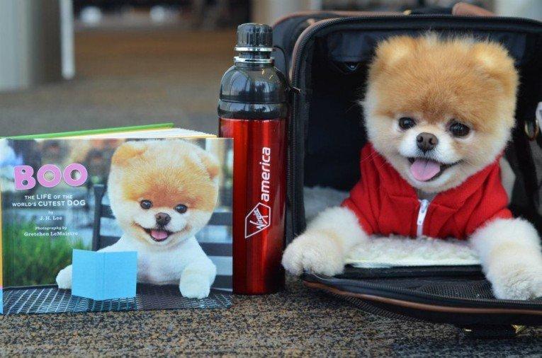 Boo, il cane più carino al mondo diventa ambassador Virgin America