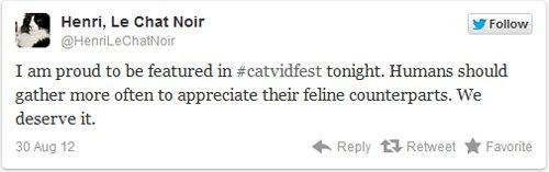 Nasce un festival per i video dei gattini: Henry the Cat è il più famoso
