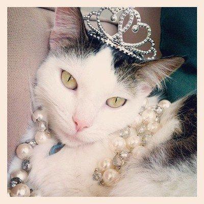 Rich cats of Instagram: i gatti più chic della rete!