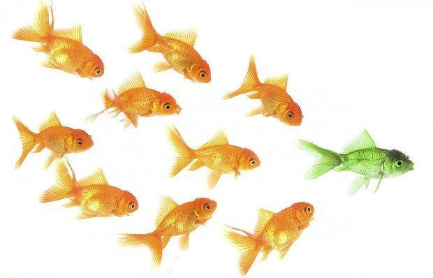 Il potere della leadership informale. Non sempre le gerarchie sono il faro di un'organizzazione.