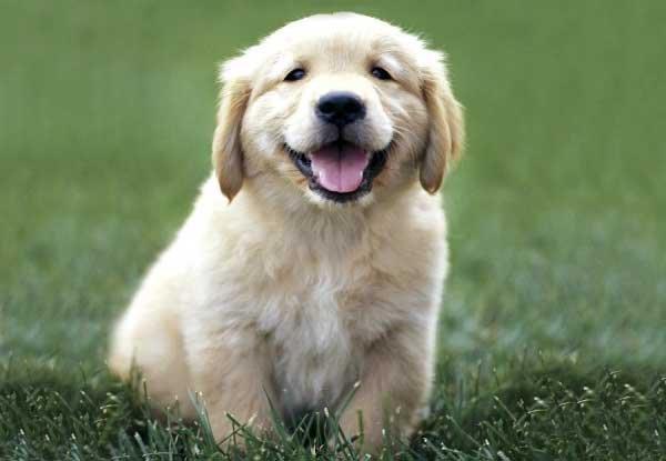 Come le foto di cuccioli aumentano la tua produttività