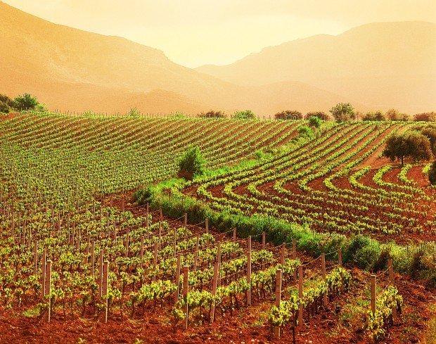 Ritorno alla terra: i nuovi imprenditori agricoli con laurea e cravatta