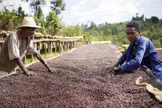 Il commercio Equo e Solidale: un approccio Equo anche da un punto di vista imprenditoriale