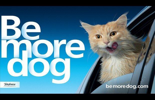 Basta gatti: i nuovi testimonial di O2 sono i cani! [VIDEO]