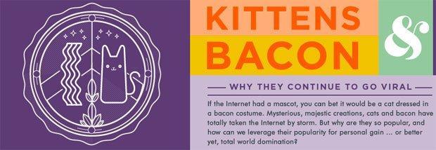 Perché i gatti (e il bacon) sono ancora virali [INFOGRAFICA]