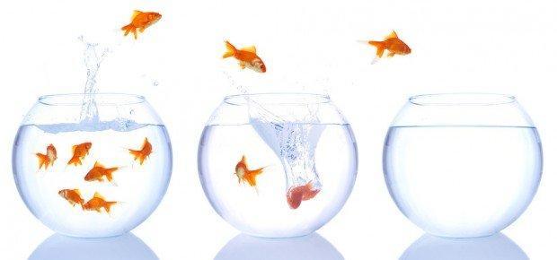Expeditionary marketing: a caccia di nuovi mercati!
