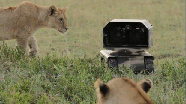 National Geographic: camere robot per filmati naturalistici da 30 e lode