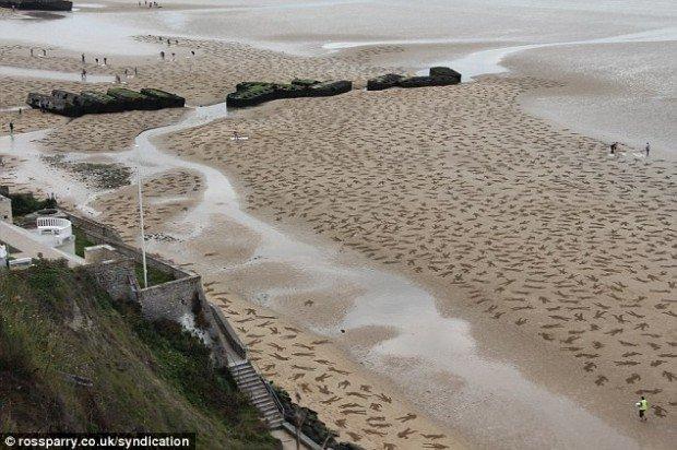 9.000 corpi sulla spiaggia: l'installazione pacifista di Wardley e Moss