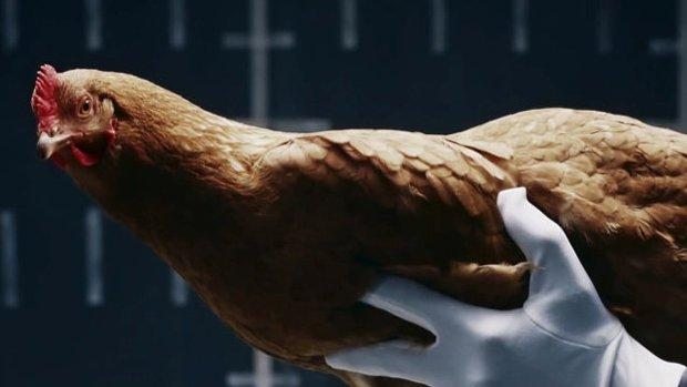 Mercedes, polli per sospensioni intelligenti [VIDEO]