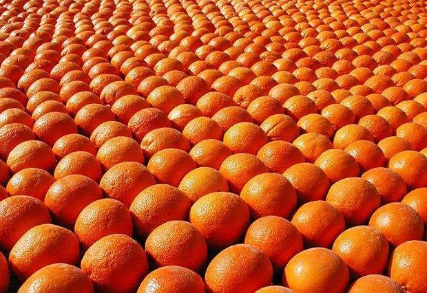 Innovazione, startup e bucce d'arancia