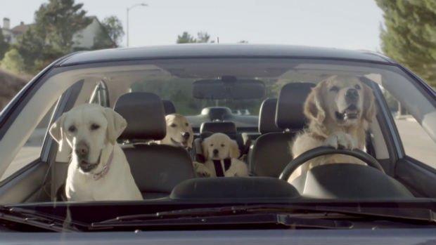 Subaru: alla guida dell'auto c'è un Golden Retriever [VIDEO]
