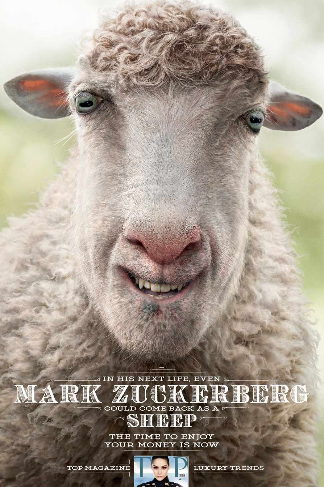 mark zuckerberg sheep