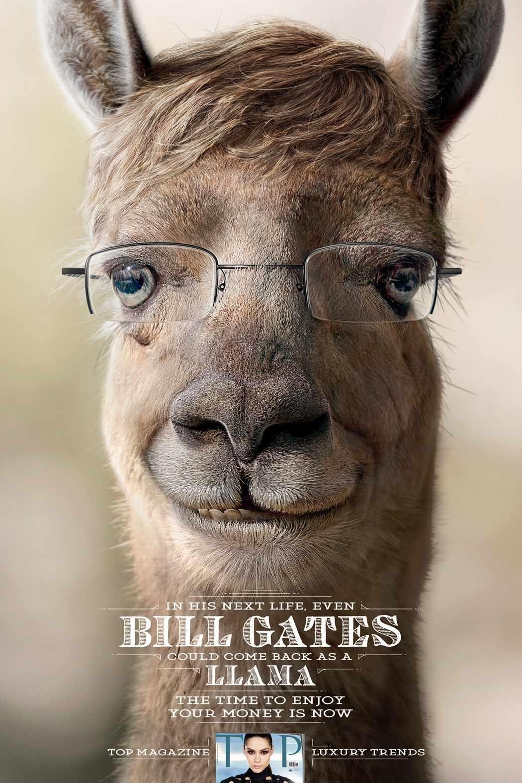 bill gates llama