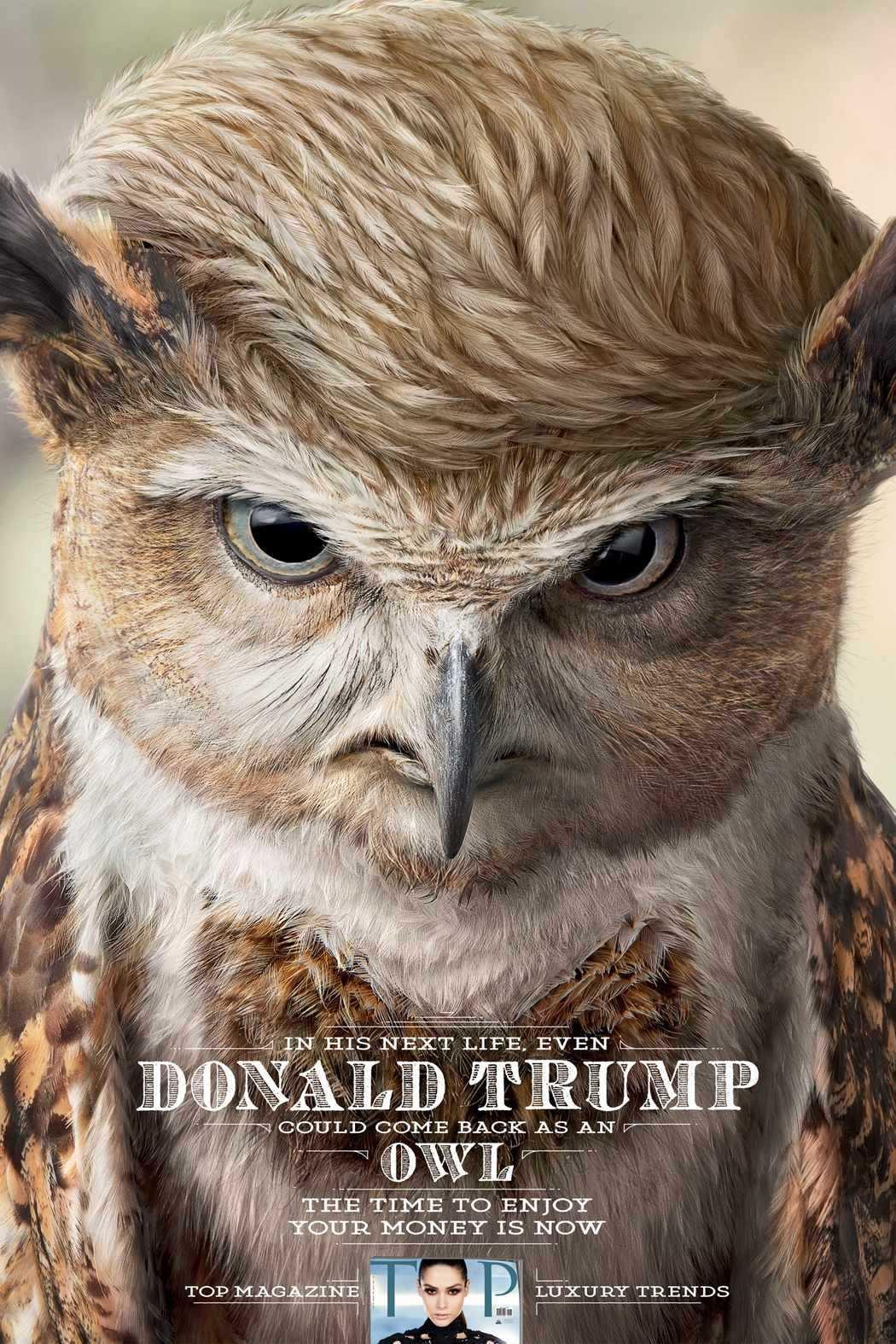 donald trump owl