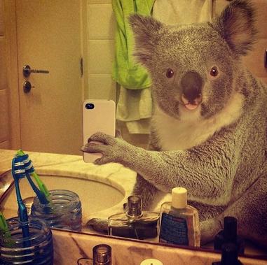 Con National Geographic il Selfie diventa Wild