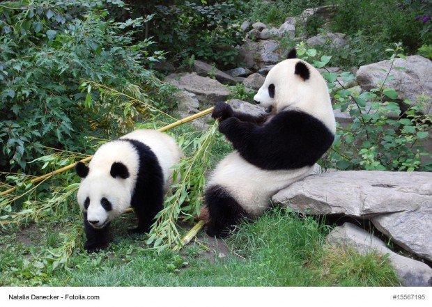 EndangeredEmoji: un retweet per salvare gli animali