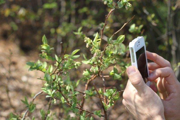 Csmon Life, l'app che tutela l'ambiente e la biodiversità