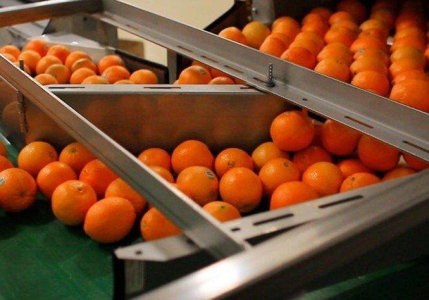 OrangeFiber, da SharkThank alla produzione industriale