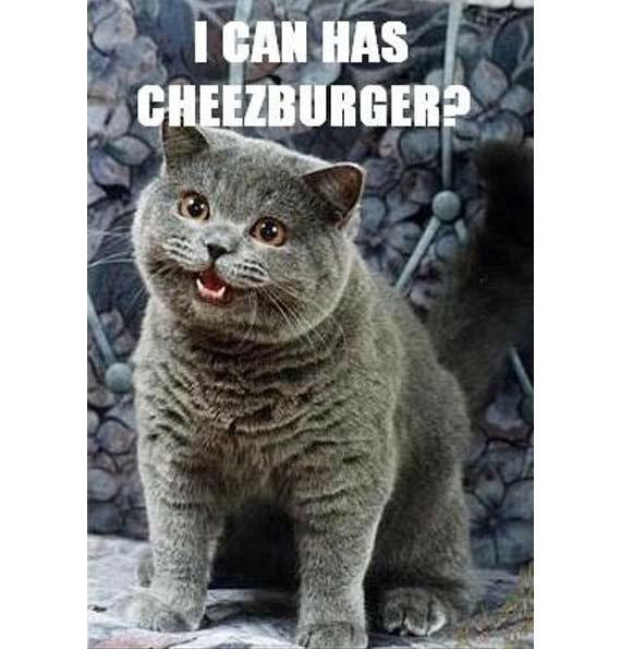 cat-internet-meme