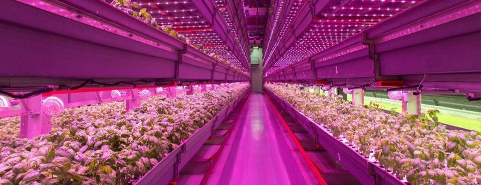 I food trend ecologici coltiva, consuma e riduci gli sprechi