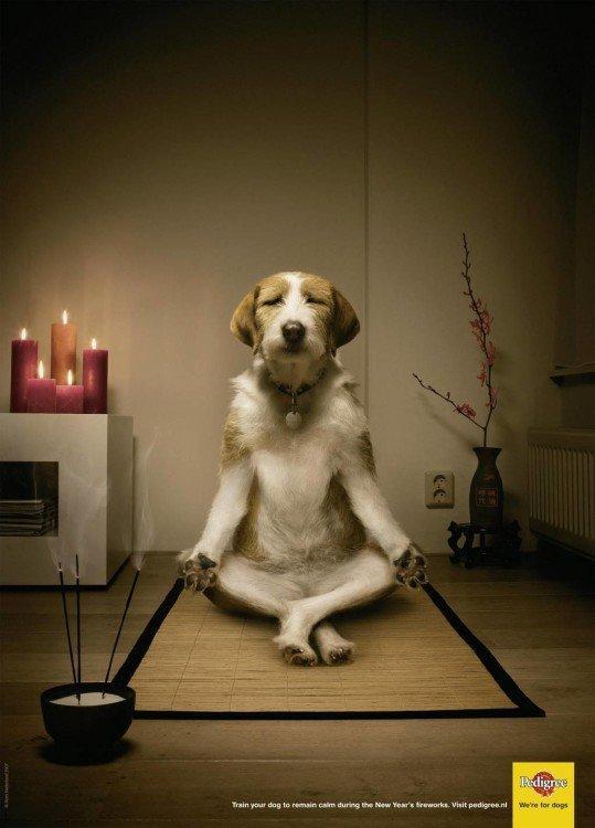 cane che fa yoga