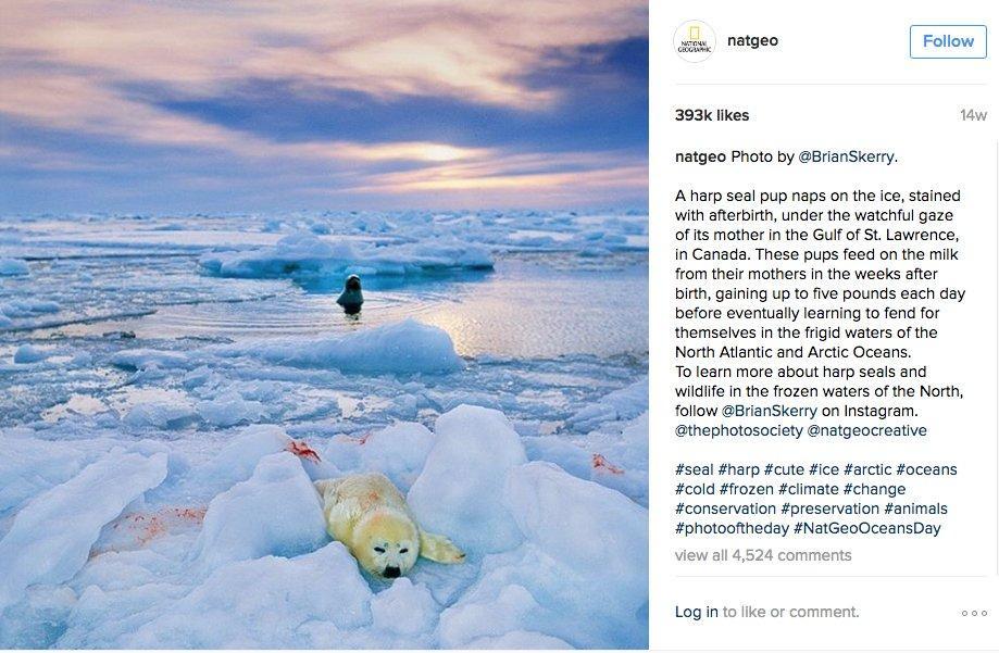 Instagram: la guida per giornalisti