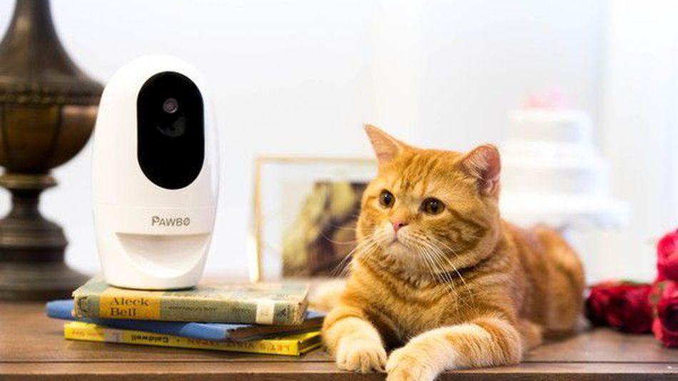 PawBo: mai più cuccioli da soli a casa!