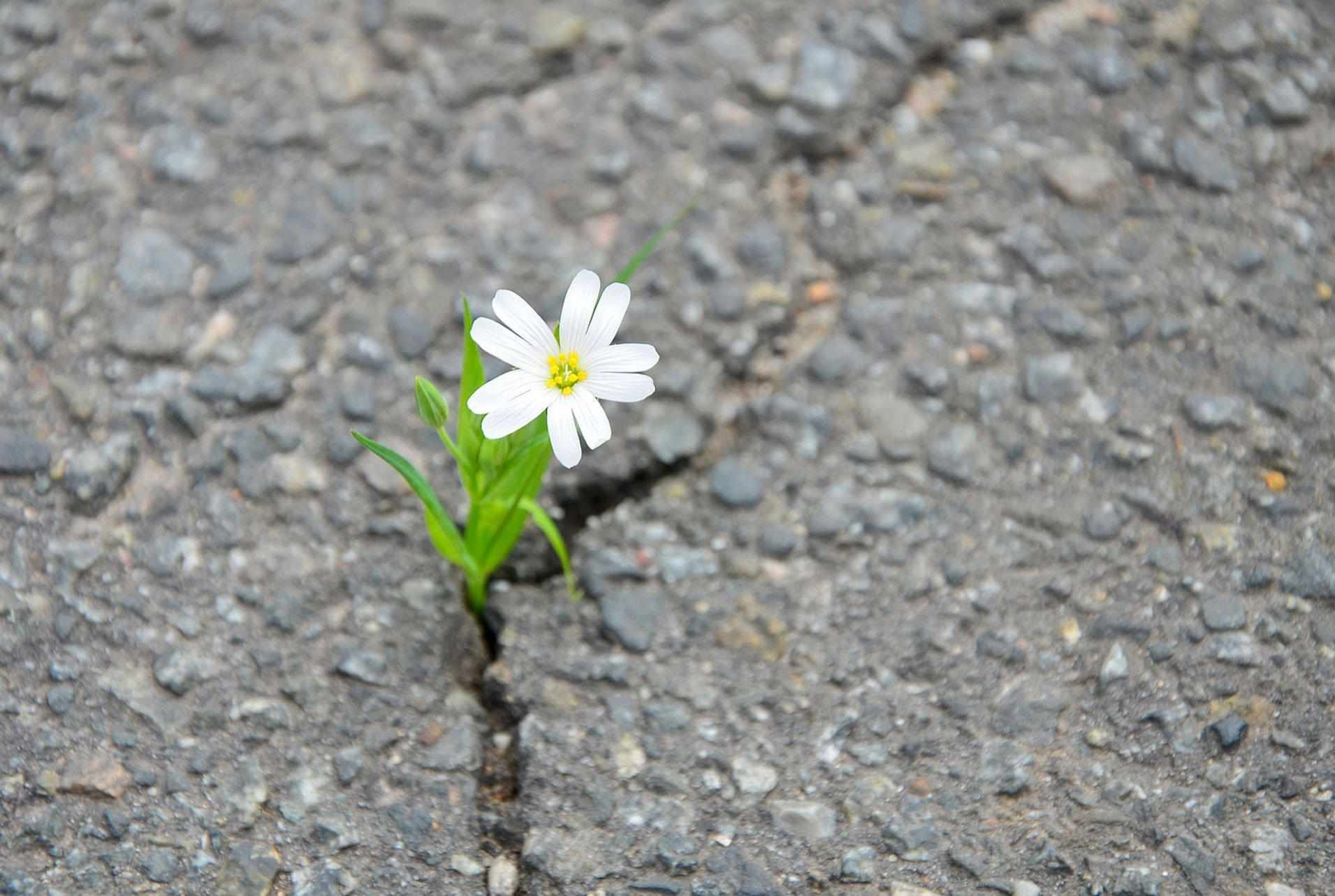 resilienza_1