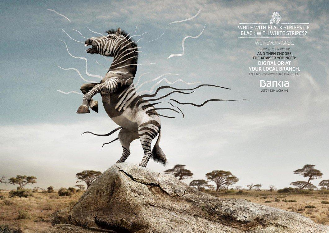 zebra_0