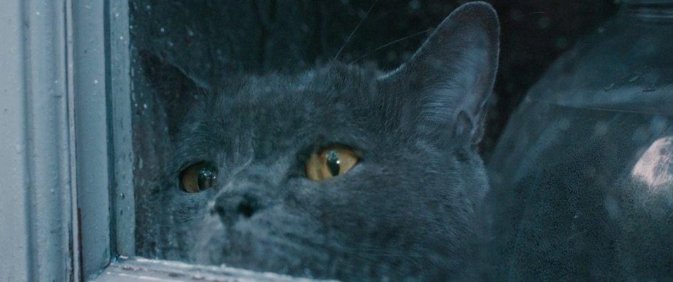 Abbiamo intervistato i creatori del video con i gatti più tristi del mondo