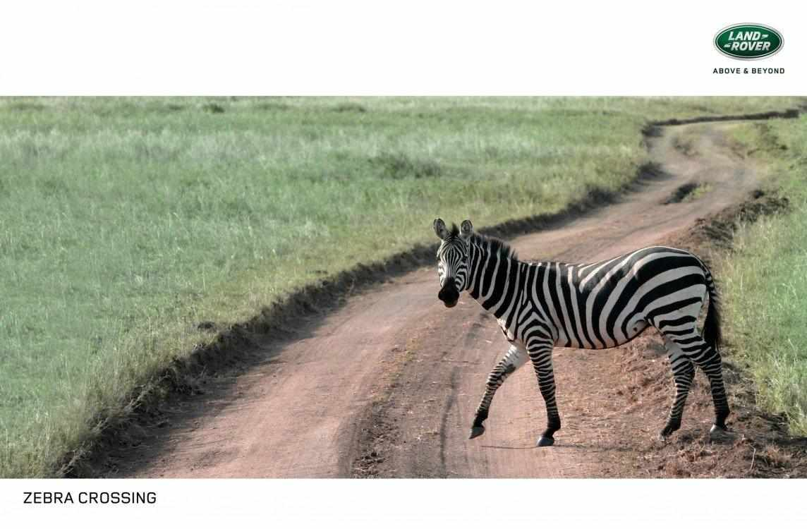 zebra_crossing_0