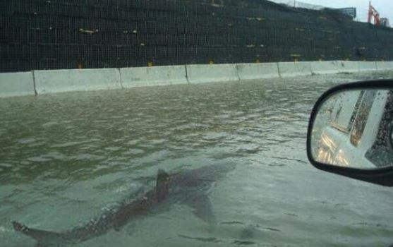 squalo-in-strada