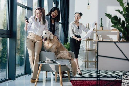 Il cane in ufficio aumenta la produttività: ecco le policy più pet-friendly delle aziende