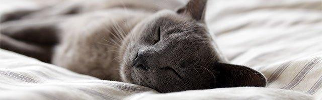 dormire bene per migliorare se stessi