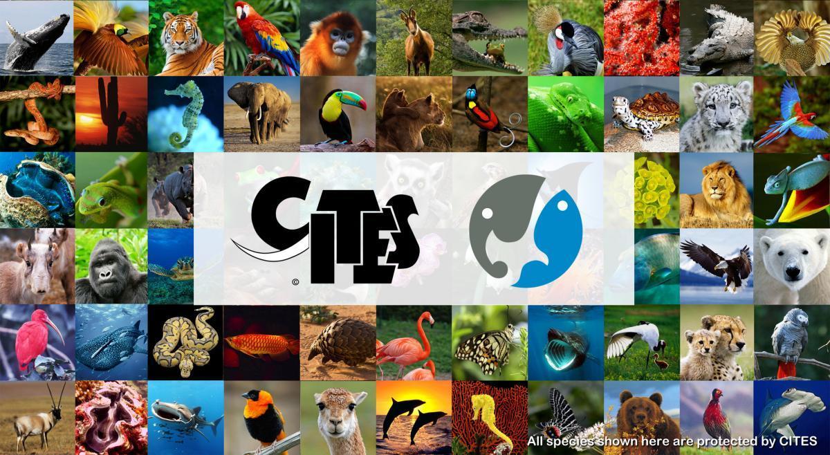 CITES-commercio-illegale