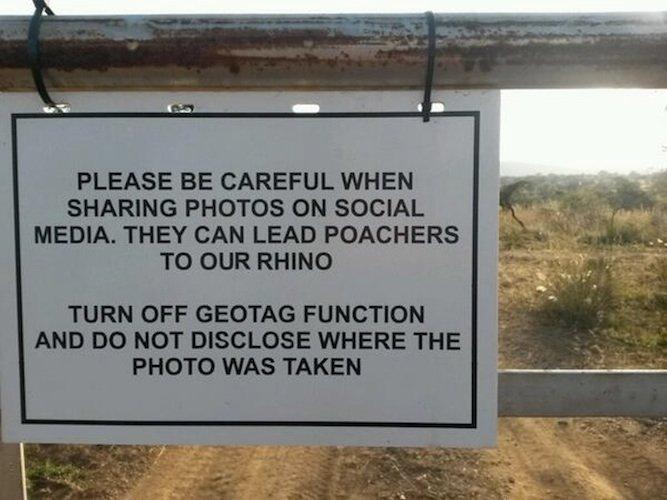 commercio-illegale-estinzione