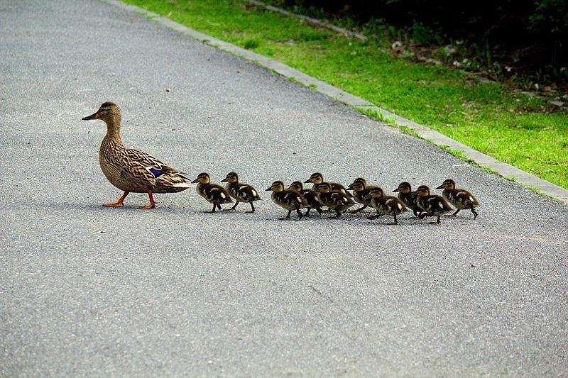 20 dritte essenziali per ottenere più follower su Twitter