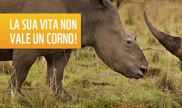 landing_rinoceronte_812
