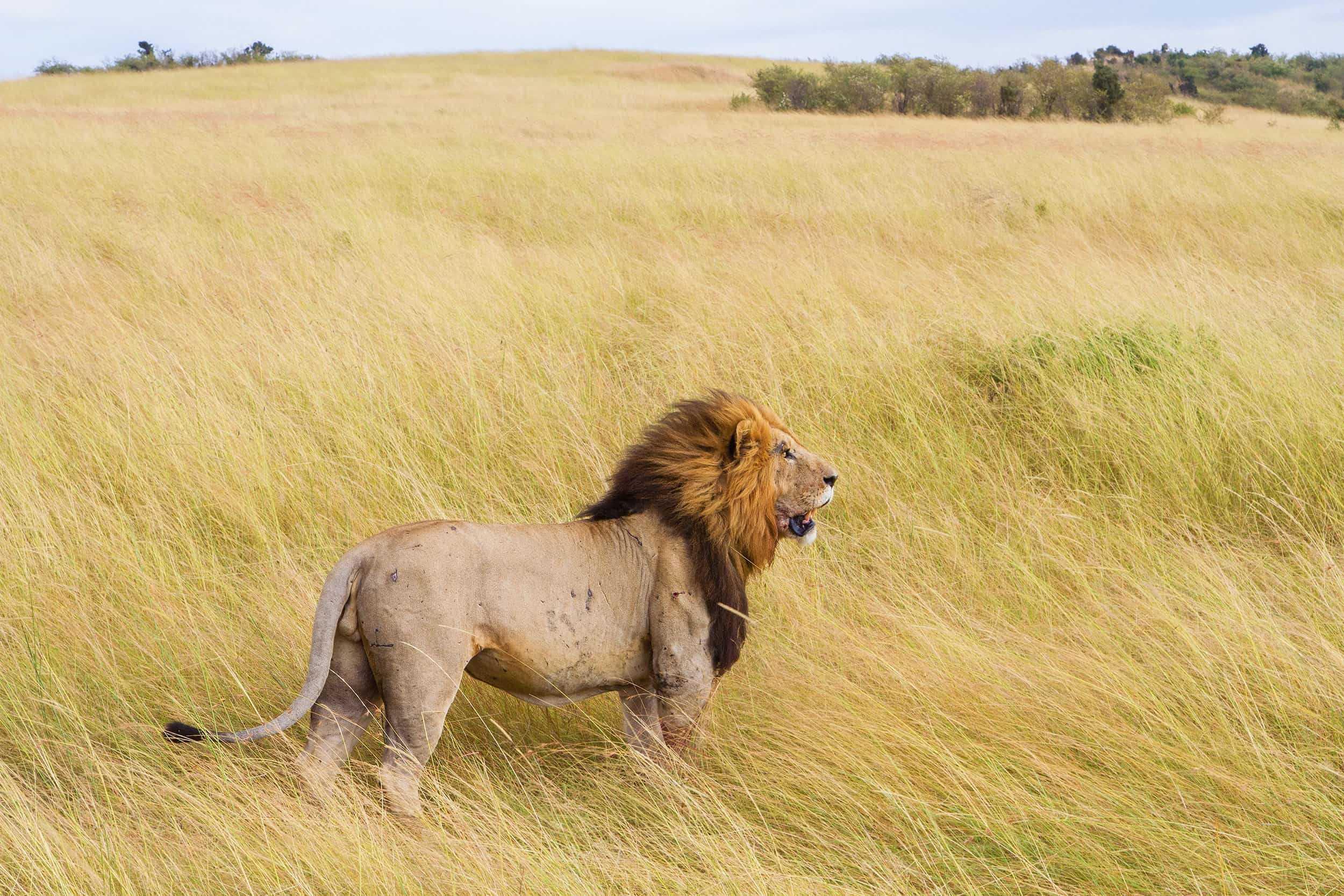 cronotipo leone