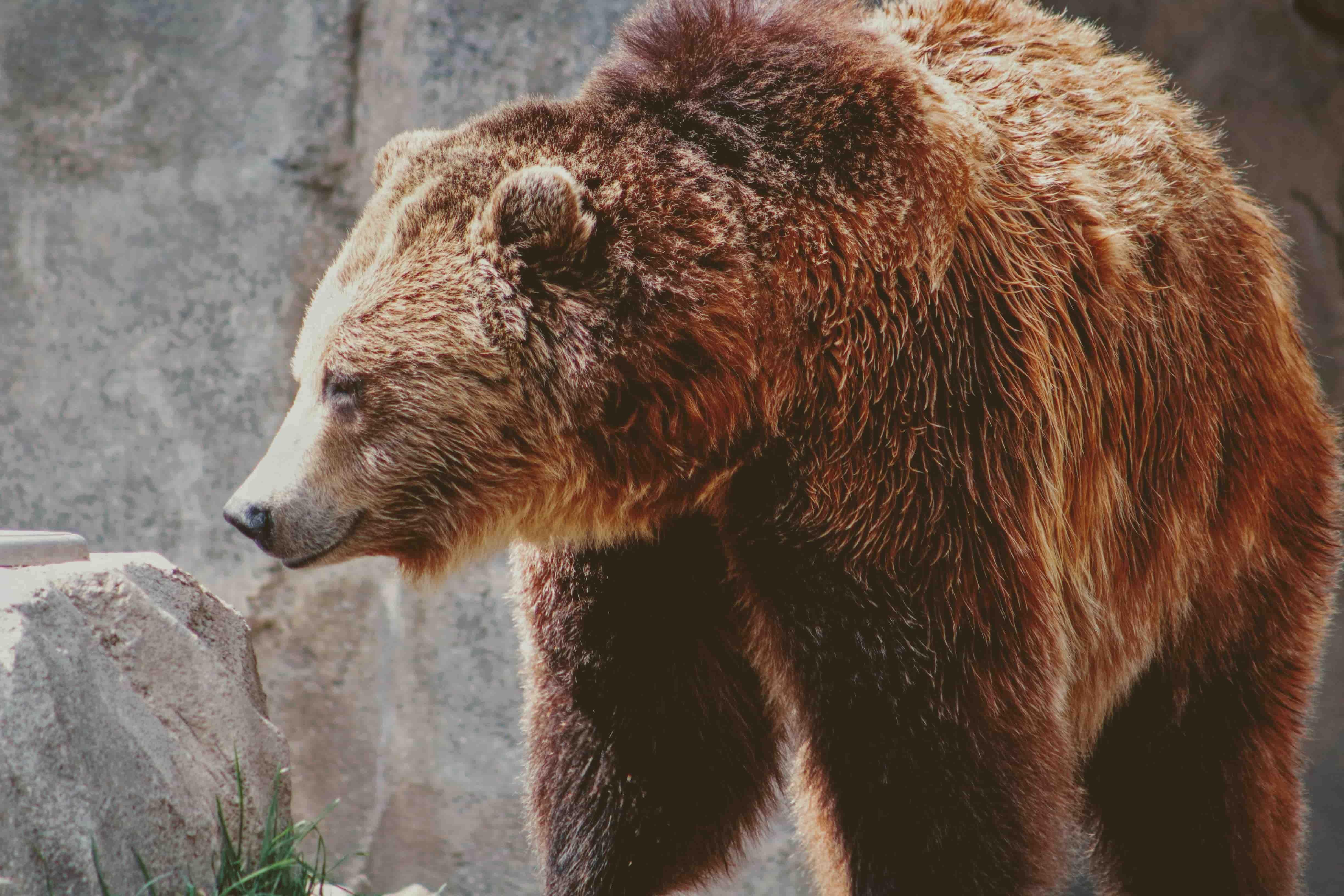 cronotipo orso