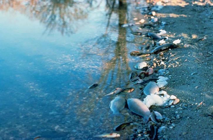 inquinamento acque maker faire