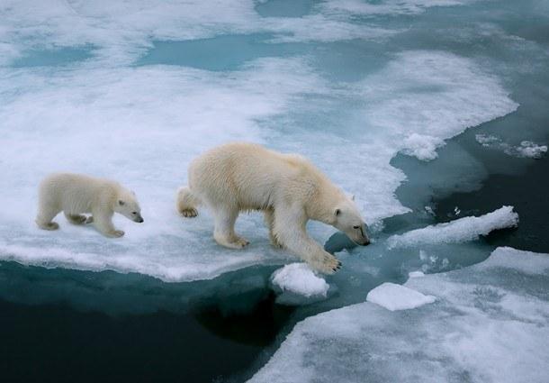I social media hanno aiutato a sensibilizzare sul Climate Change, ma hanno dato spazio anche agli scettici